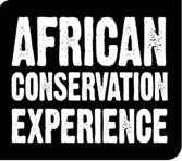 African Conservation Experiance Logo