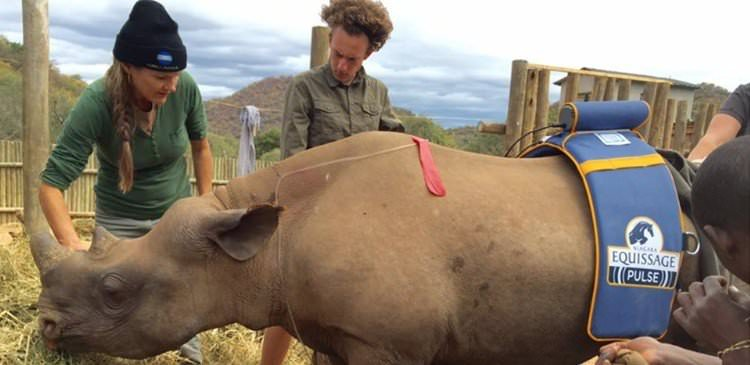 Rhino orphan Thor receives intensive care