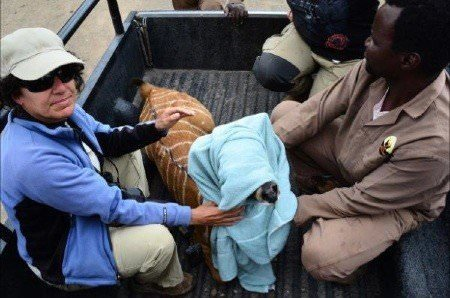 Young nyala rescued from village and brought back to the reserve