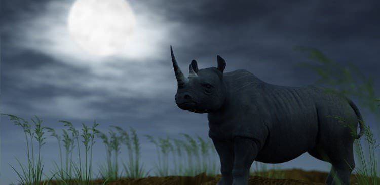 Super Moon: Anything but romantic for rhino conservation