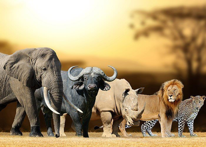 Image result for african animals