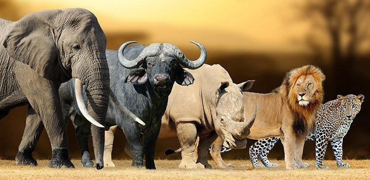 Which Big Five African Animal Are You? – Quiz