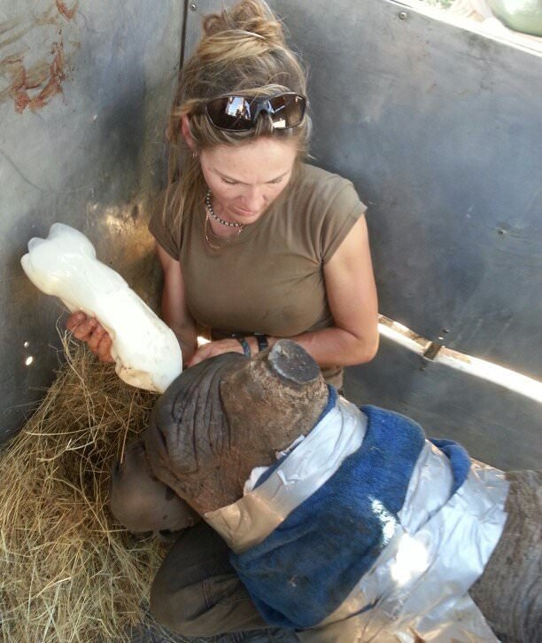 Petronel caring for baby rhino