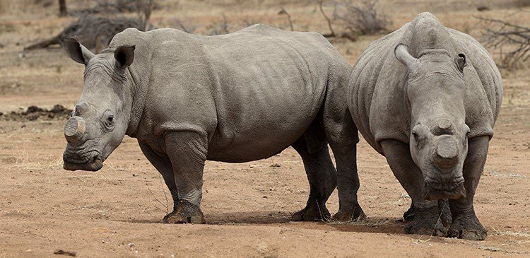 Traveller's Stories: What it's like to spend 2 weeks caring for and rehabilitating rhinos in Africa