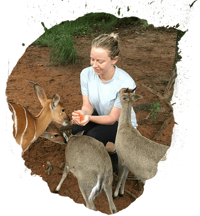 Small antelope being fed in Africa