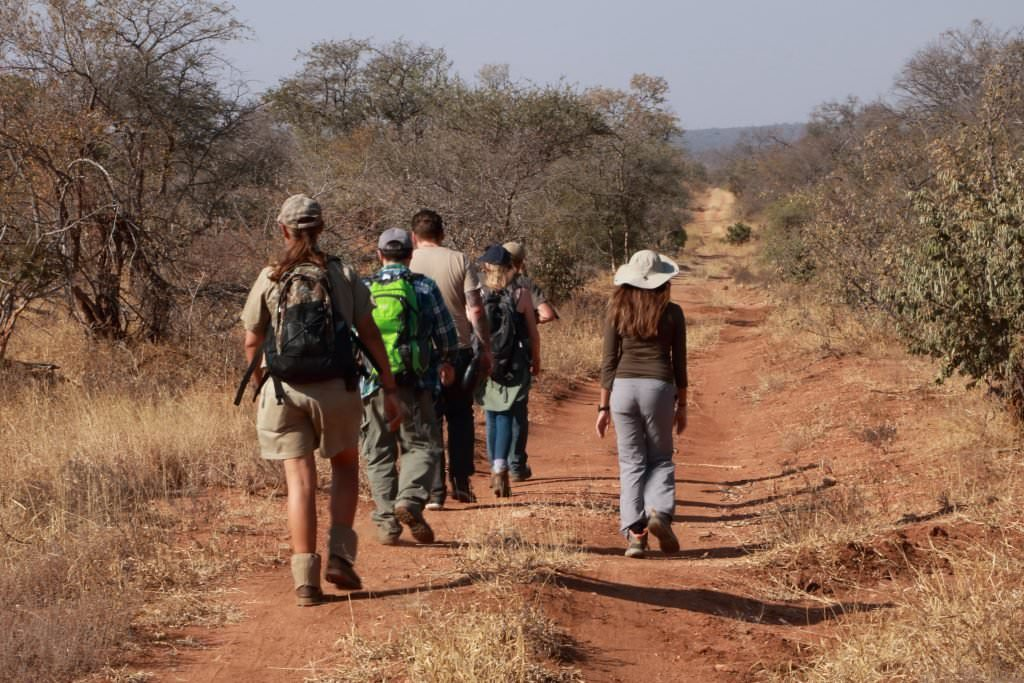 Conservation volunteers in the African bush walking down a track away from the camera