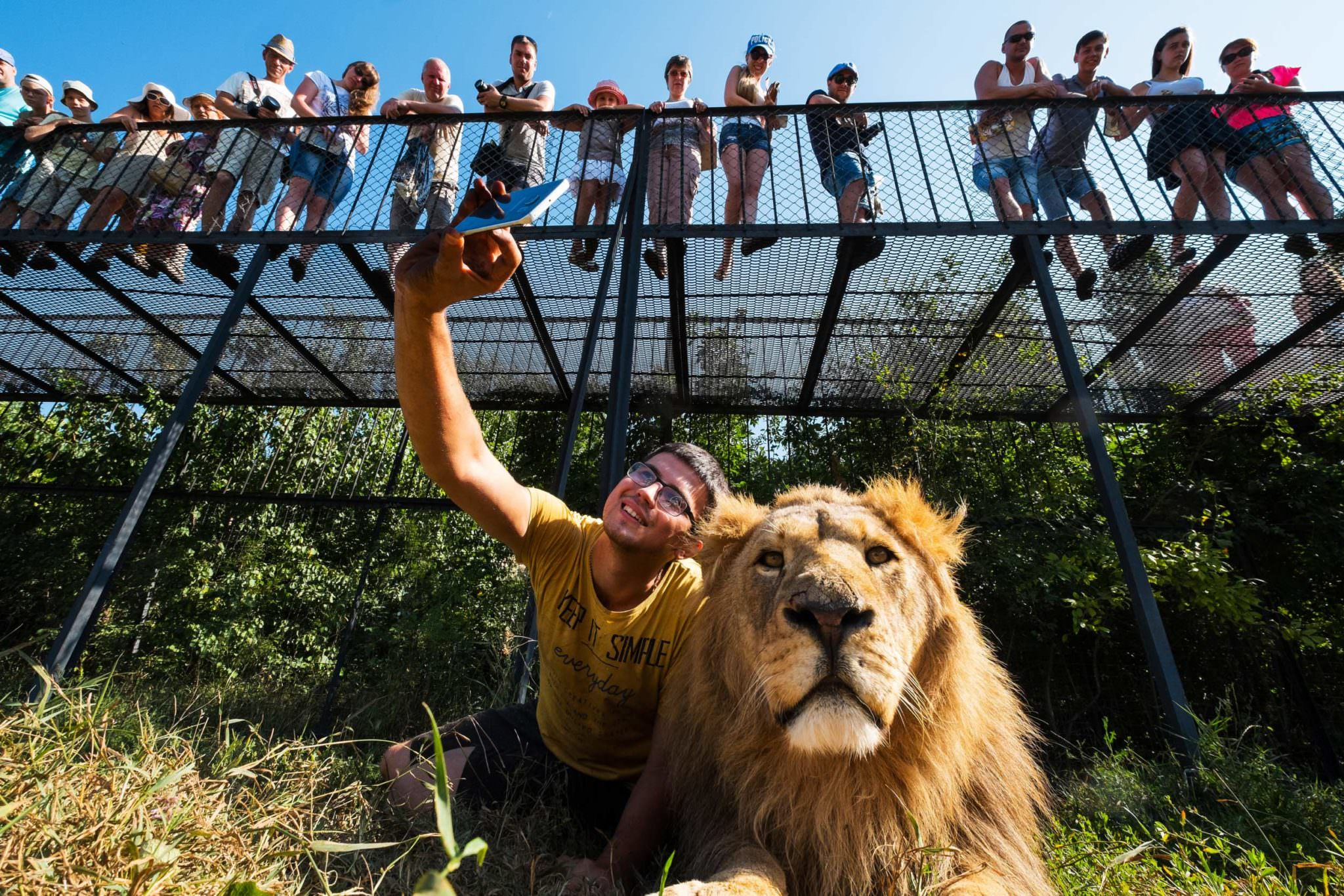 A young man taking a selfie of himself with a lion using his mobile phone