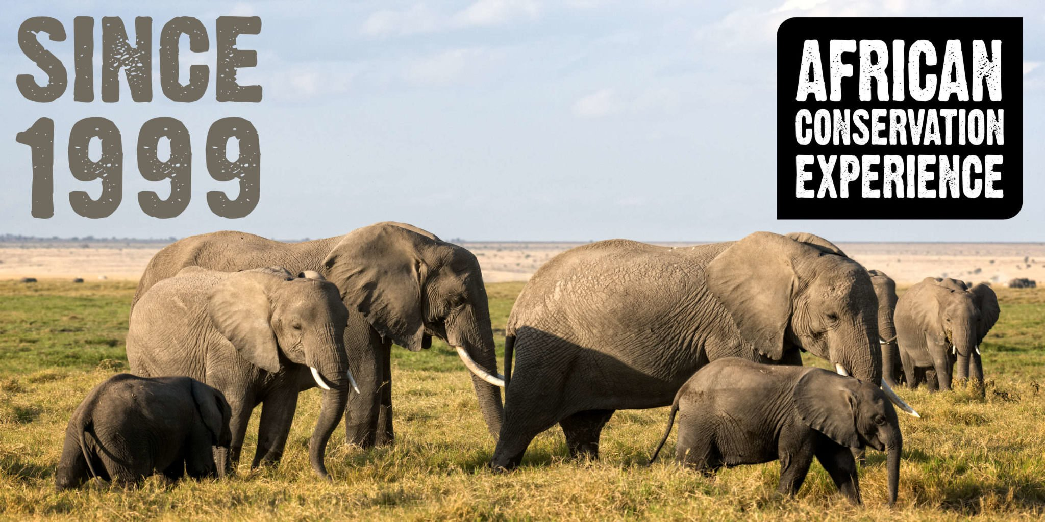 Volunteer Experiences | African Conservation Experience